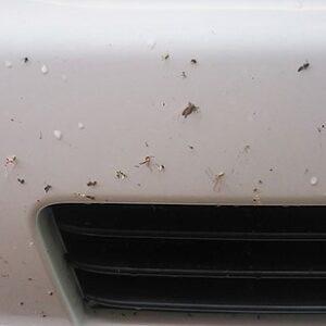 この夏高速道路走行時にこびりついた虫つしまオートで取れます!